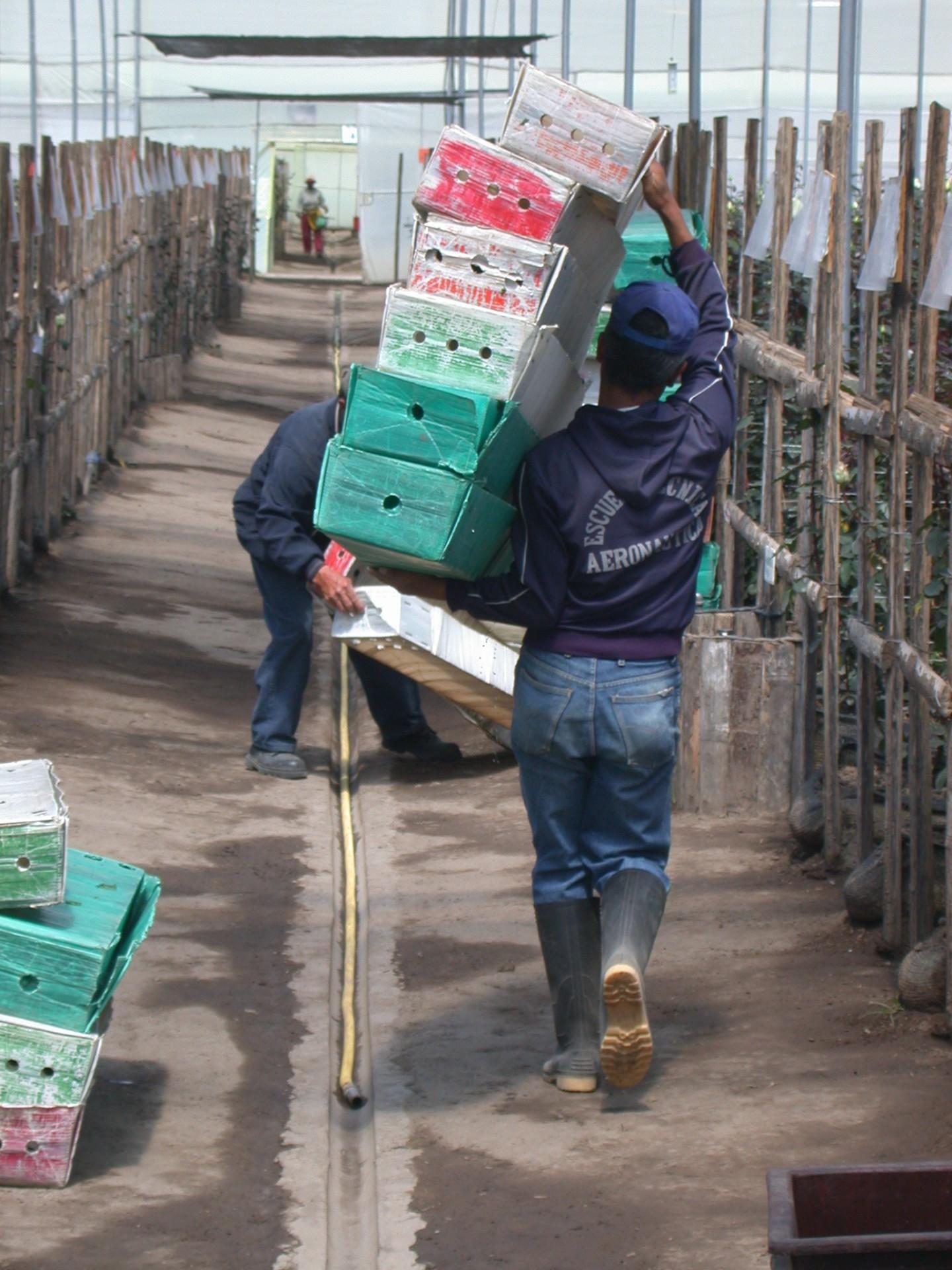 greenhouse_worker
