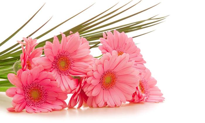 Flower Www.yasgroup.ir 13