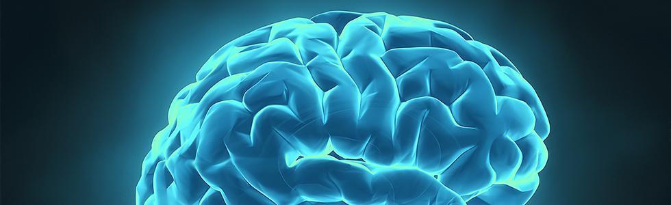 ۰۸ Brain